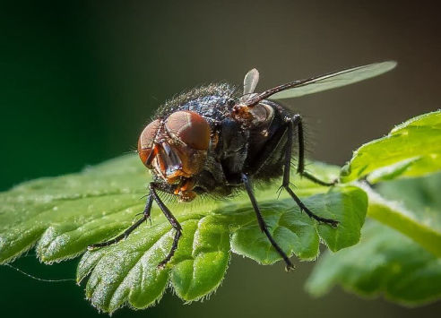 Flies | Axholme Pest Control Services