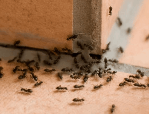 Insect Control | Axholme Pest Control